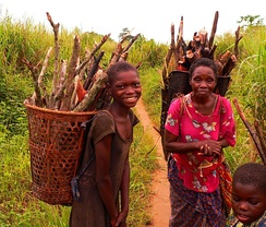 Collecting firewood in Basankusu.