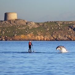 Bottlenose dolphin playing with a paddle boarder in front of Dalkey Island