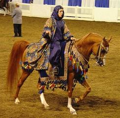 """Арабская лошадь в """"родном костюме"""", использующимся как на выставке, так и на конкурсе"""