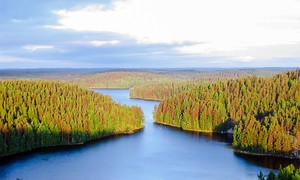 Repovesi lake in Finland, where there are some 187,888 lakes larger than 500 square metres