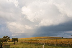 Barossa Valley, northeast of Adelaide