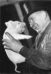Pig at a German new year event, 1965.