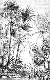 Palms and cycads as they might have appeared in the middle Tertiary