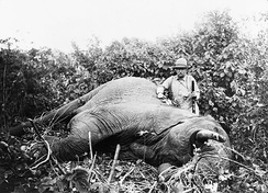 Former U.S. President Theodore Roosevelt's 1909 hunting trip helped popularize the African safari