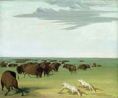 Buffalo hunt under the wolf-skin mask, George Catlin, 1832–33.