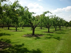 The College orchard