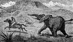 Explorer and big game hunter Samuel Baker chased by an elephant, illustration from 1890