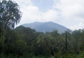Fossey established her research camp on the foothills of Mount Bisoke.