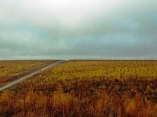 Лесопосадка лиственницы в предгорьях хребта Сихотэ-Алинь (вдоль дороги Р-454), Хабаровский край. Деревья были высажены после очередного пожара. Съёмка— октябрь 2012 года