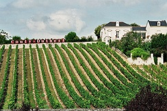 Vineyard in the Loire Valley