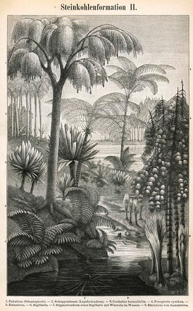 Etching depicting some of the most significant plants of the Carboniferous.