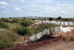 The disused Occidental jetty, and reed beds of Canvey Wick.