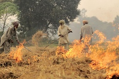 Burning of rice residues after harvest, to quickly prepare the land for wheat planting, around Sangrur, Punjab, India.