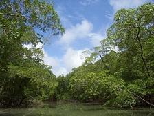 Дождевой лес в бассейне Амазонки— типичный биотоп анаконды