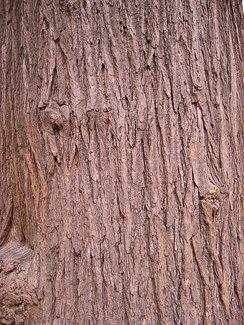 This is only a two dimensional image of a tree, but appears to have the texture of three dimensional bark.