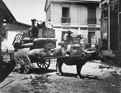 Carabao cart in the Philippines in 1899