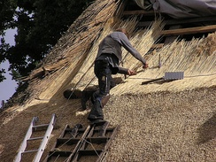 A German roofer thatching a roof with reeds (he is wearing the traditional waistcoat and trousers of a craftsman)