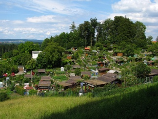 Typical allotments on the Käferberg hill in Zürich, Switzerland