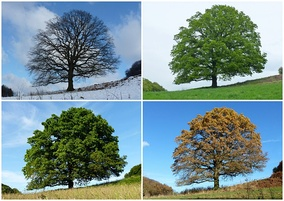 Four temperate and subpolar seasons Winter, Spring Summer, Autumn/Fall