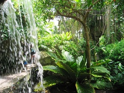 The glass house at the Cleveland Botanical Garden recreates a Costa Rican rain forest.