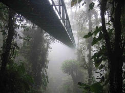 One of the hanging bridges of the skywalk at the Monteverde Cloud Forest Reserve in Monteverde, Costa Rica disappearing into the clouds