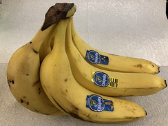 A bunch of bananas with the iconic Señorita Chiquita logo, a primary export commodity of Latin America.[12]