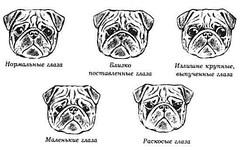 Разновидности пропорций глаз