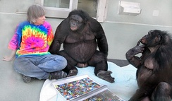"Bonobos Kanzi (C) and Panbanisha (R) with Sue Savage-Rumbaugh and the outdoor symbols ""keyboard"""
