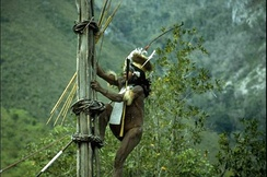 Kurulu Village War Chief at Baliem Valley in New Guinea.
