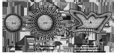 Схема строения максимальной гигроскопической влаги по данным различных авторова— по Лебедеву[5], б— по Цункеру[1], в— по Качинскому[7]