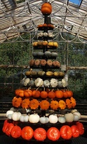 White, green, and orange squashes built into a Christmas tree shape