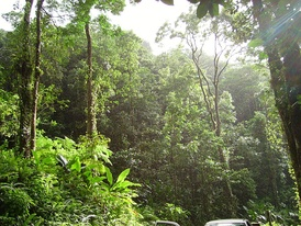 A tropical forest near Fond St-Denis