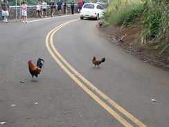 Why did the chicken cross the road? To get to the other side.