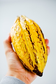 Cocoa in São Tomé