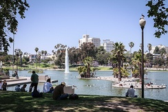 MacArthur Park in Westlake. Palms are common in Los Angeles due to its climate