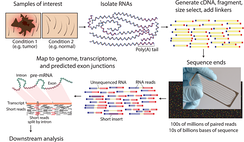 Overview of RNA-Seq.