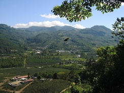 A coffee plantation in the Orosí Valley