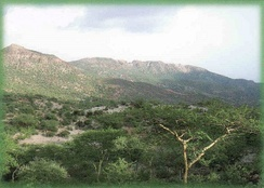 Plant species on the Mabla Mountains.