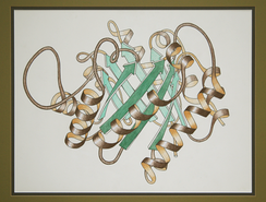Ribbon schematic of the 3D structure of the protein triosephosphate isomerase. The brown spirals are α-helices and the green arrows are β strands, the components of β-pleated sheets.