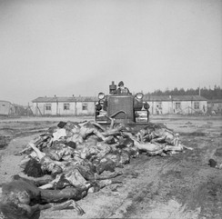 A British Army bulldozer pushes bodies into a mass grave at Belsen. April 19, 1945
