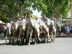 An abrivado at Calvisson. The gardians demonstrate their ability to contain and manoeuvre a group of bulls at speed
