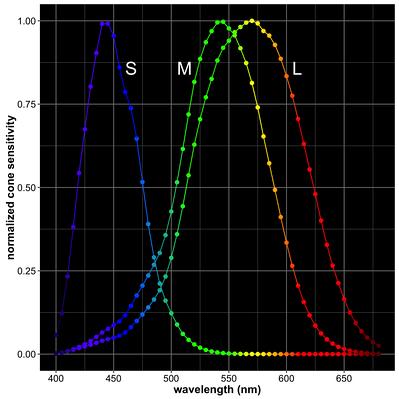 Normalized cone spectral sensitivity curves