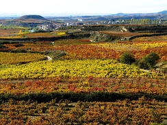 A vineyard of Rioja
