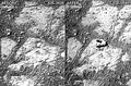 """Pinnacle Island"" rock - ""mysterious"" appearance imaged by Opportunity (January 17, 2014).[11][10]"