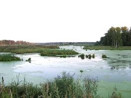Верхне-Яузские болота в национальном парке «Лосиный Остров»