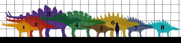 Сравнительный размер различных стегозаврид
