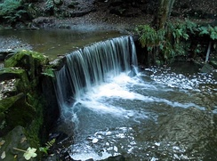 The Trent passes over a man-made waterfall in Hollin Wood just downstream from its source.