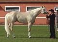 Светло-соловая лошадь