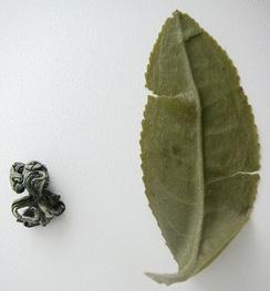 Листовой зелёный чай до и после заваривания