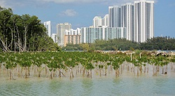 How town and nature can go together, Oleta State Park, North-Miami,Fl. -Exemple que la ville et la nature peuvent cohabiter - panoramio.jpg